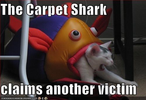 Carpet tubarão