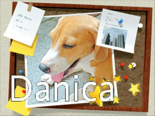 My Beagle Danica