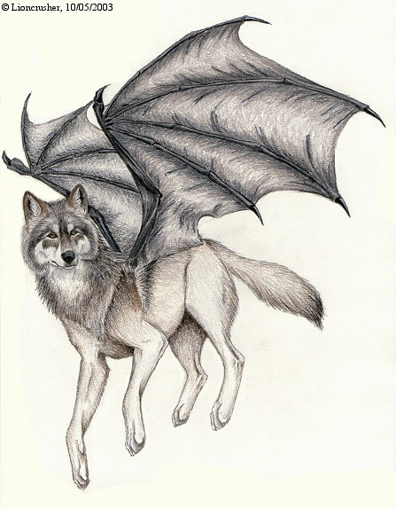 Winged White Wolf Drawings