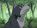 Anime Animals - anime-animal photo