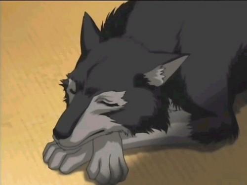 anime động vật