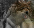 Jacob black wolf form