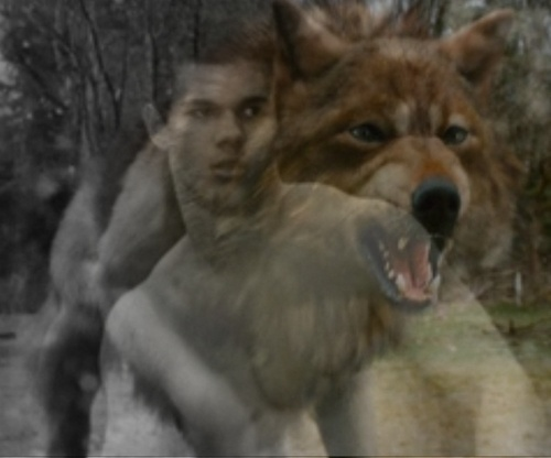 Jacob black chó sói, sói form