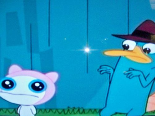 phineas y ferb fondo de pantalla called Perry and Meap meet