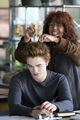 behind scenes - twilight-series photo