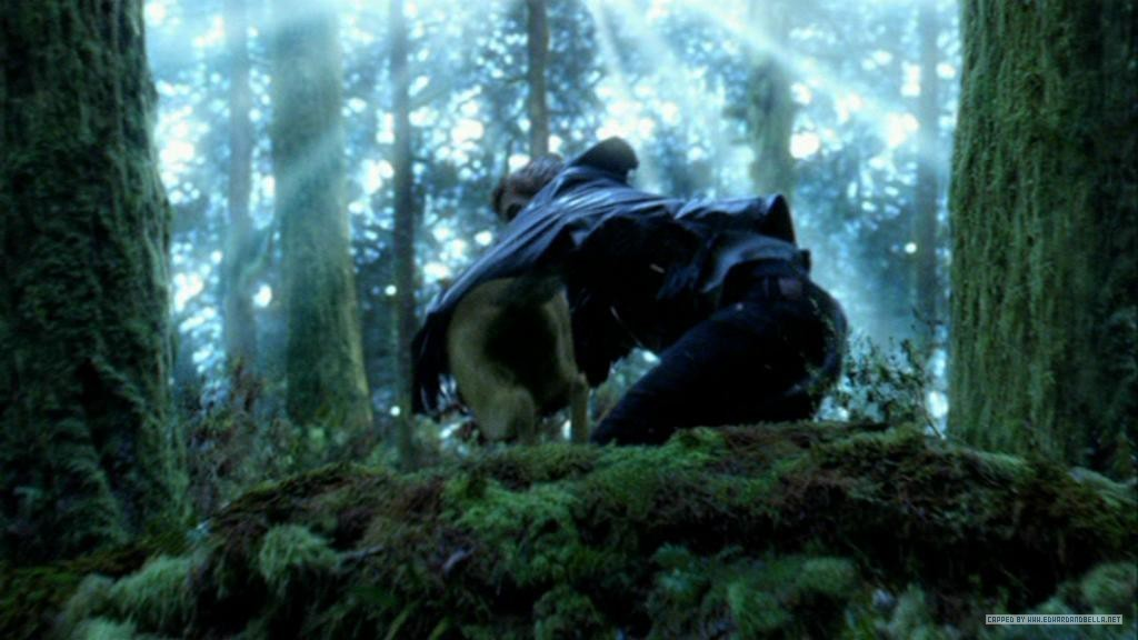 http://images2.fanpop.com/images/photos/6600000/hunting-twilight-series-6638960-1024-576.jpg