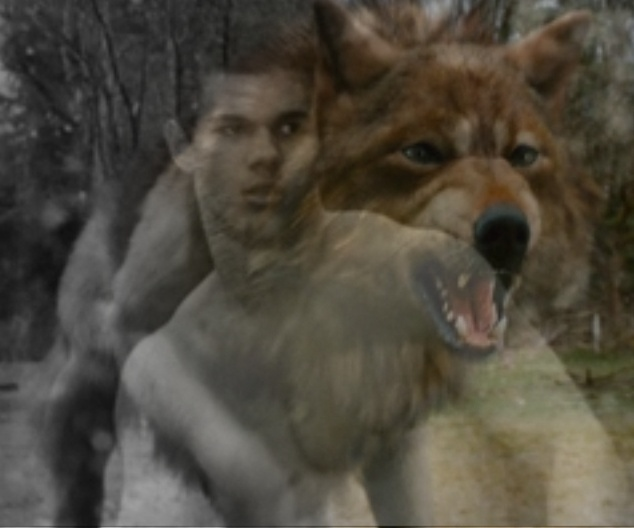 twilight jacob black wolf - photo #7