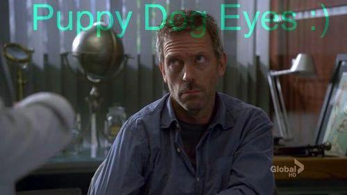 cún yêu, con chó con eyes
