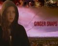 Ginger Snaps wallpaper - ginger_wal