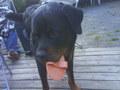 My dog agian ;)