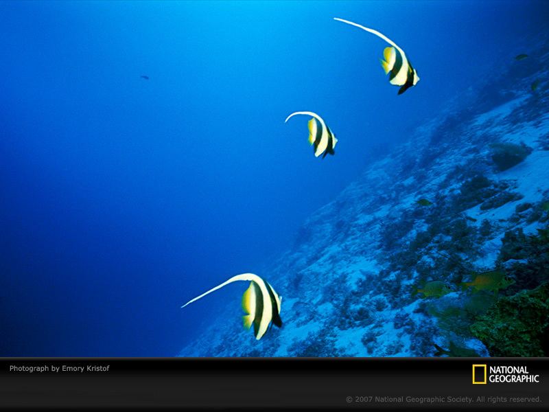 wallpaper underwater. Underwater