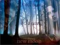 new moon_fanmade - twilight-series photo