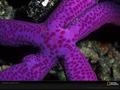 Life In Color: Purple