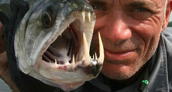 River Monsters images River Monsters wallpaper and ...