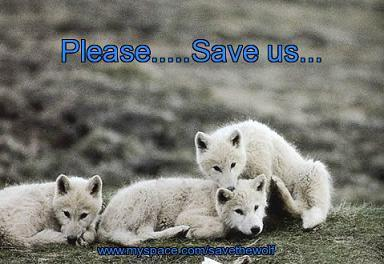 Who Will Save These Pups ?