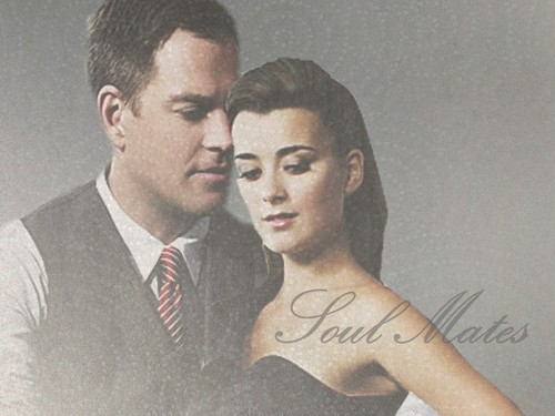 Tiva fondo de pantalla with a business suit entitled Tony and Ziva