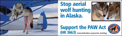 Stop This Hunting Now !!
