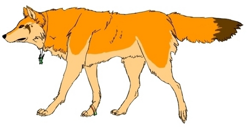 a wolf but it looks like a vos, fox