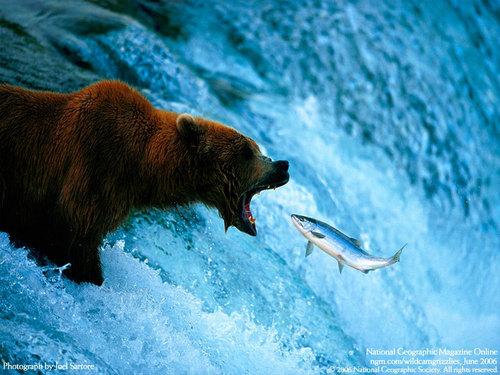 Bear-fish