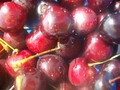 Cherries - photography wallpaper