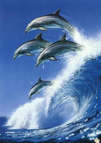 Dolphins Wallpaper Titled Cute