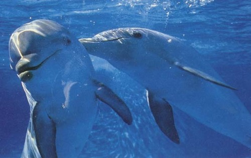 Cute dolphins - dolphins Photo