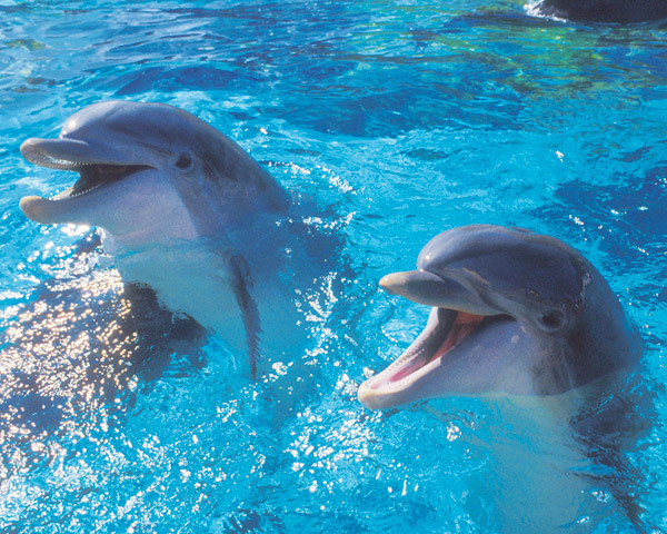 Cute dolphins - Dolphins Photo (6939944) - Fanpop