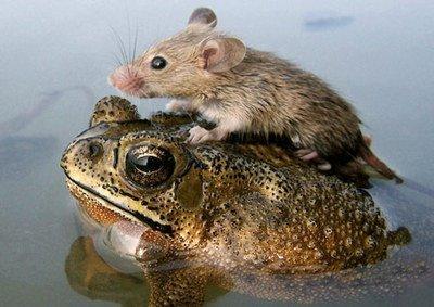 Frog-Mouce