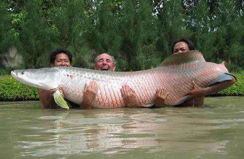 River Monsters - river-monsters Photo