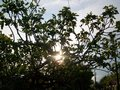 photography - Trees-Sun wallpaper