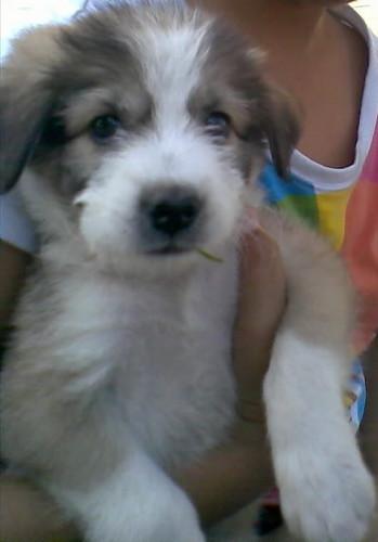 a cute Pupp