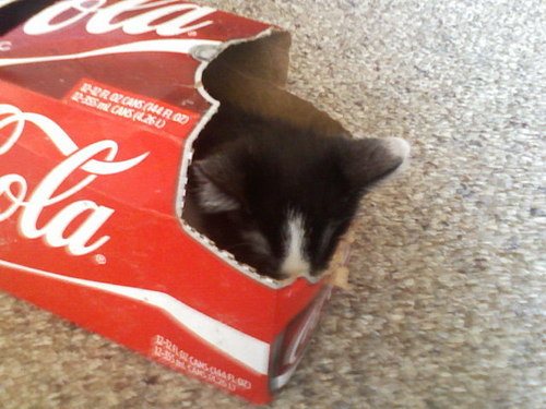 LOL my kitten sleeping in a coca-cola box