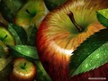 Apple Wallpaper - fruit wallpaper