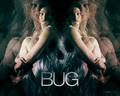 horror-movies - Bug wallpaper