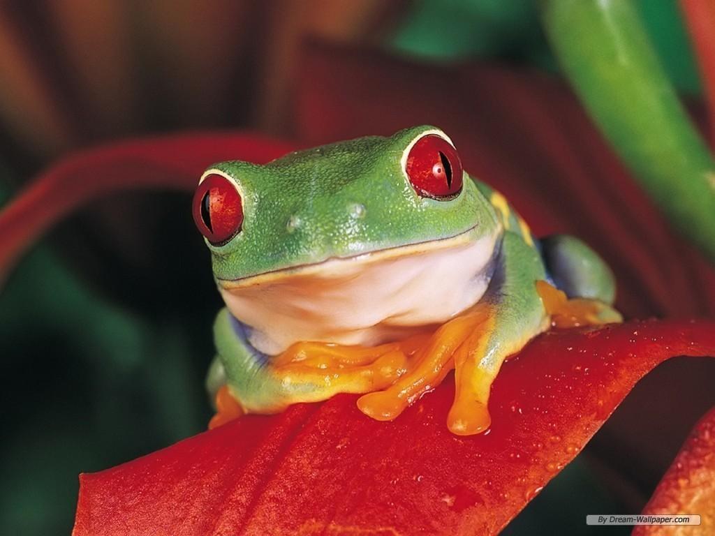 Free Frog Screensavers