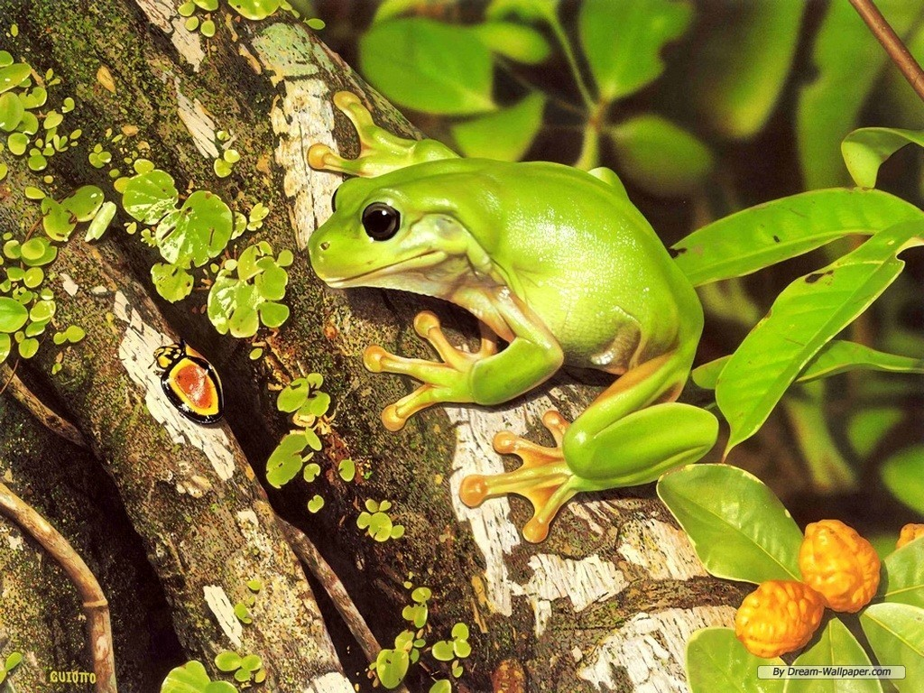 frogs images frog wallpaper hd wallpaper and background