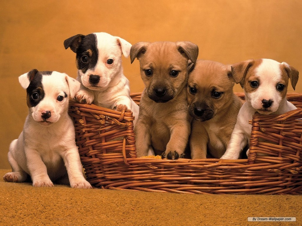 puppy dog wallpaper - photo #29