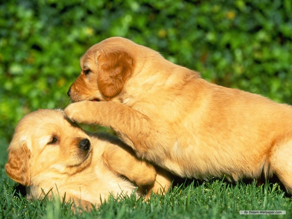 Puppy Wallpaper Dogs Wallpaper 7013375 Fanpop
