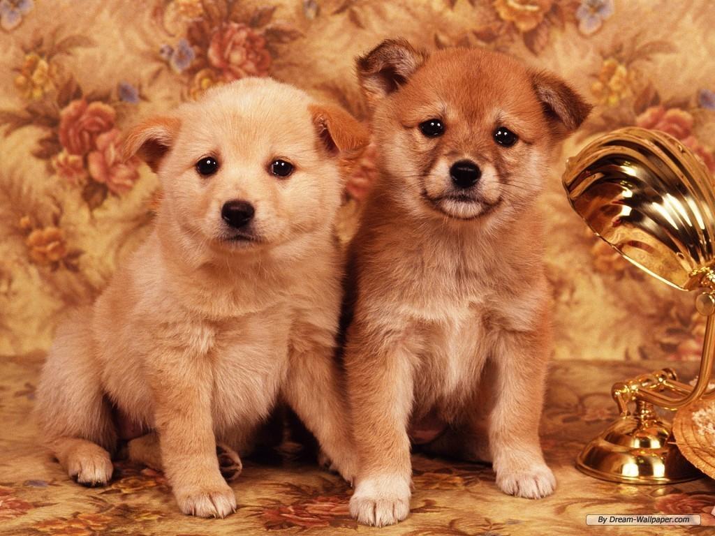puppy wallpaper dogs wallpaper 7013472 fanpop