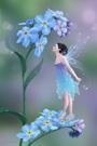 http://images2.fanpop.com/images/photos/7000000/Rachel-Anderson-fairies-7073454.jpg