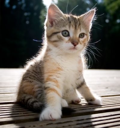 cute kitten - cats Photo