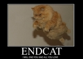 endcat!!!! - lol-cats photo