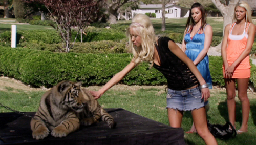 Paris Hilton's My New BFF wallpaper probably with a tiger cub called 2.01 - No More Hungry Tigers