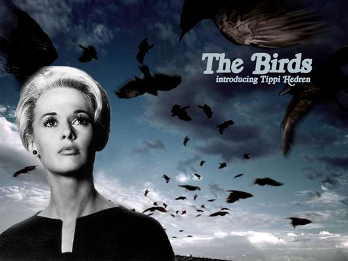 Classic Movies wallpaper with a portrait called Classic Film,The Birds