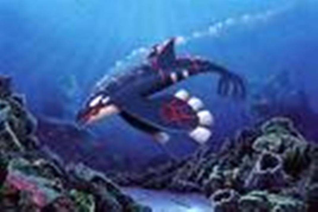 Kyogre dive