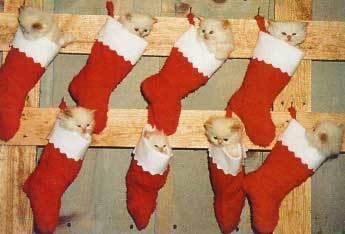 Animal Humor wallpaper containing a christmas stocking called Merry Christmas!