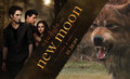 NewMoon - twilight-series photo