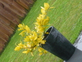 Pretty Yellow plant - photography photo
