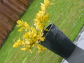 Pretty Yellow plant - photography photo