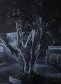 Tree at Night - pencils photo